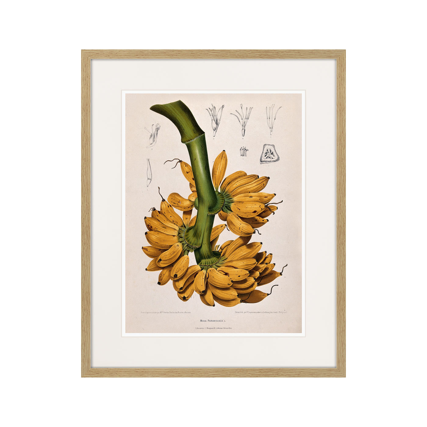 Exotic plants of the world №9, 1815г.