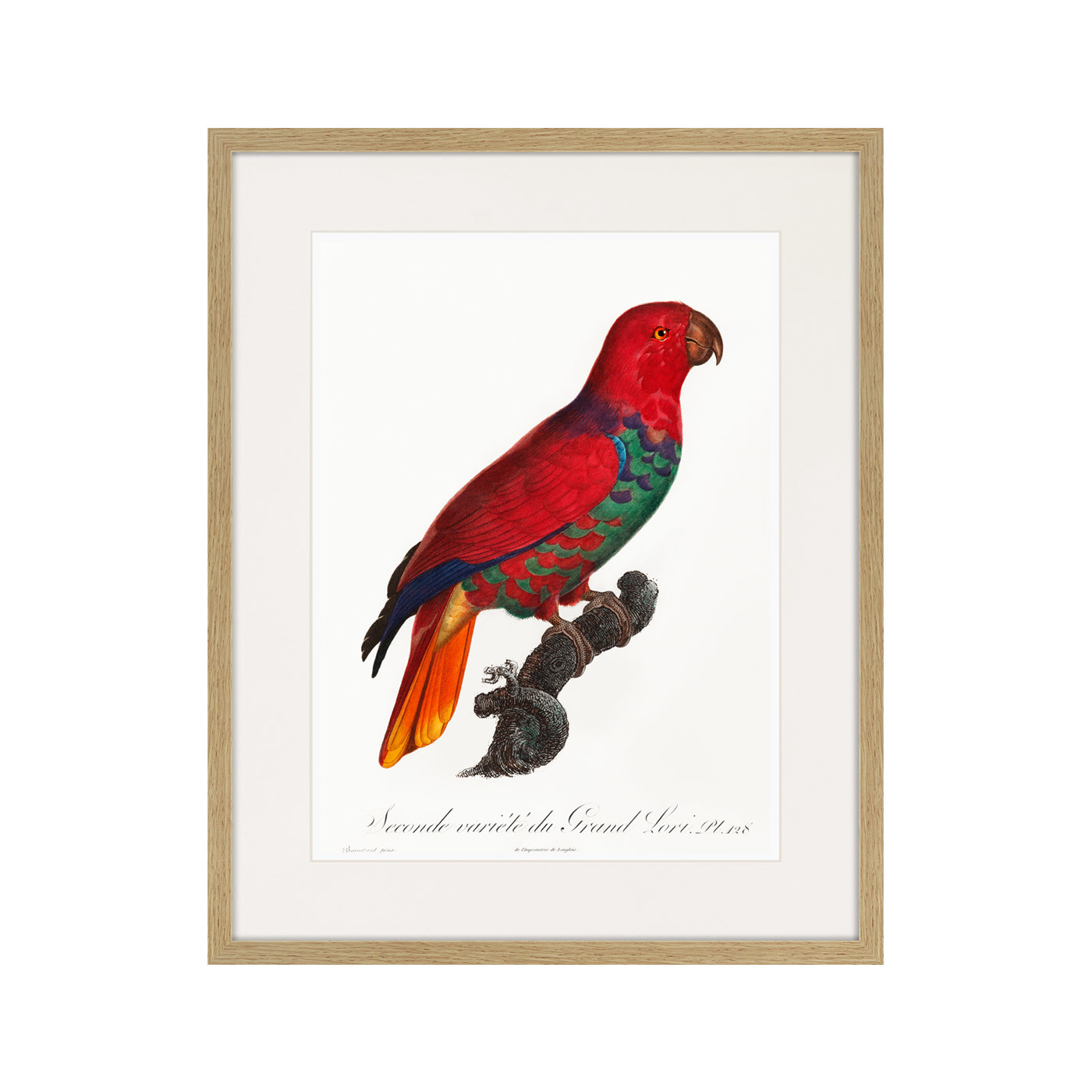 Beautiful parrots №9, 1872г.
