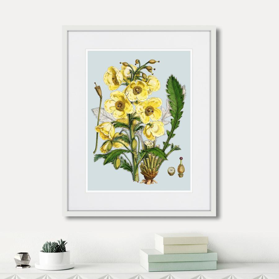 Himalaya Plants Yellow Flower, 1869г.
