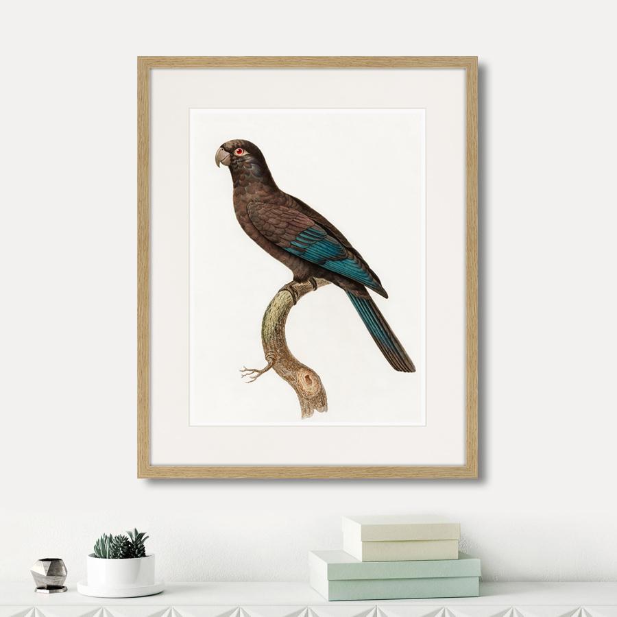 Beautiful parrots №10, 1872г.