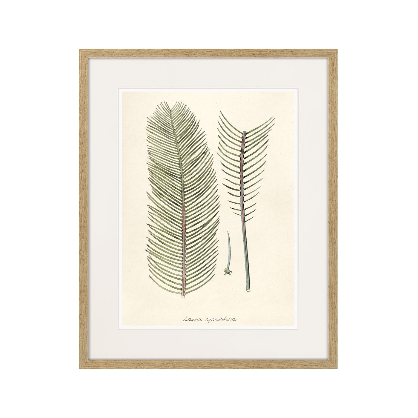 Fragmenta botanica №9, 1809г.