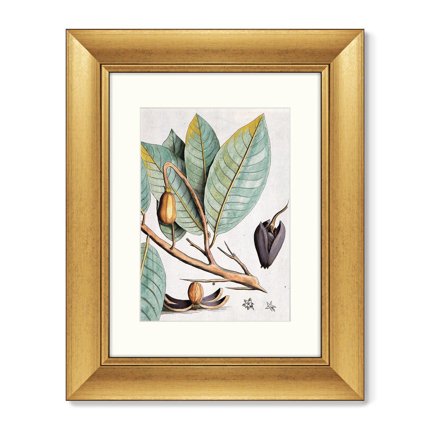Диптих Exotic plants of the world №5, 1815г. (II), (из 2-х картин)