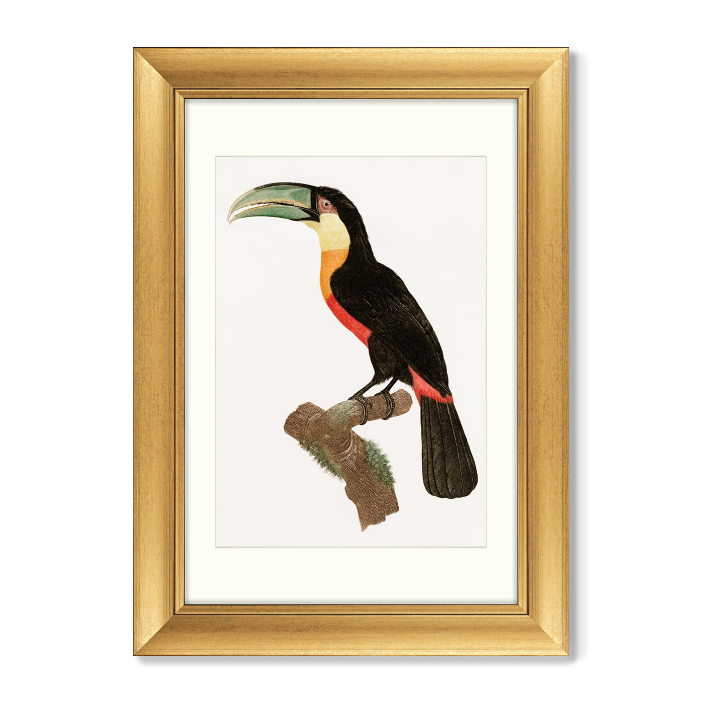 Диптих Beautiful toucans, 1806г. (из 2-х картин)
