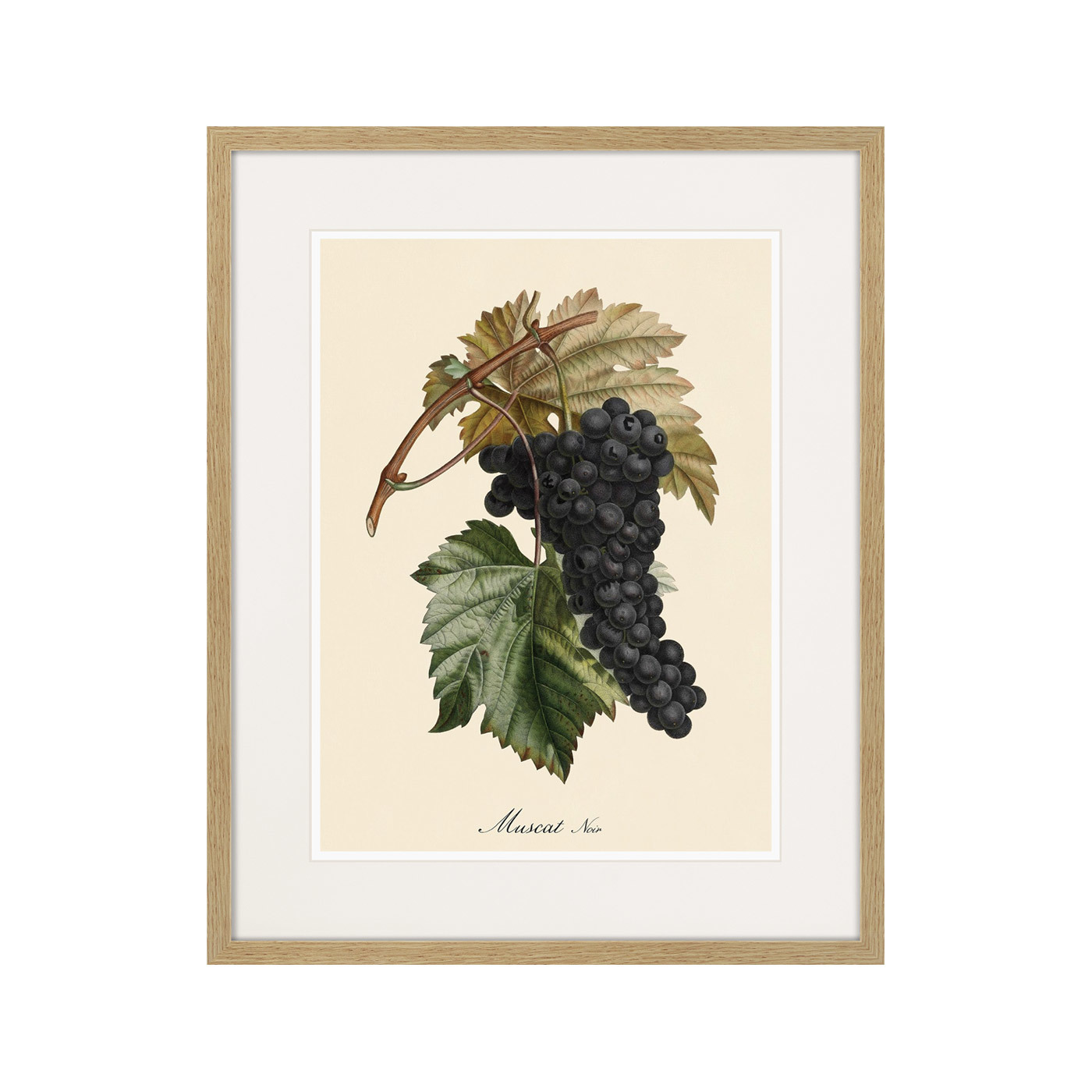 Juicy fruit lithography №12, 1870г.