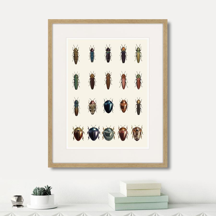 Assorted Beetles №3, 1735г.