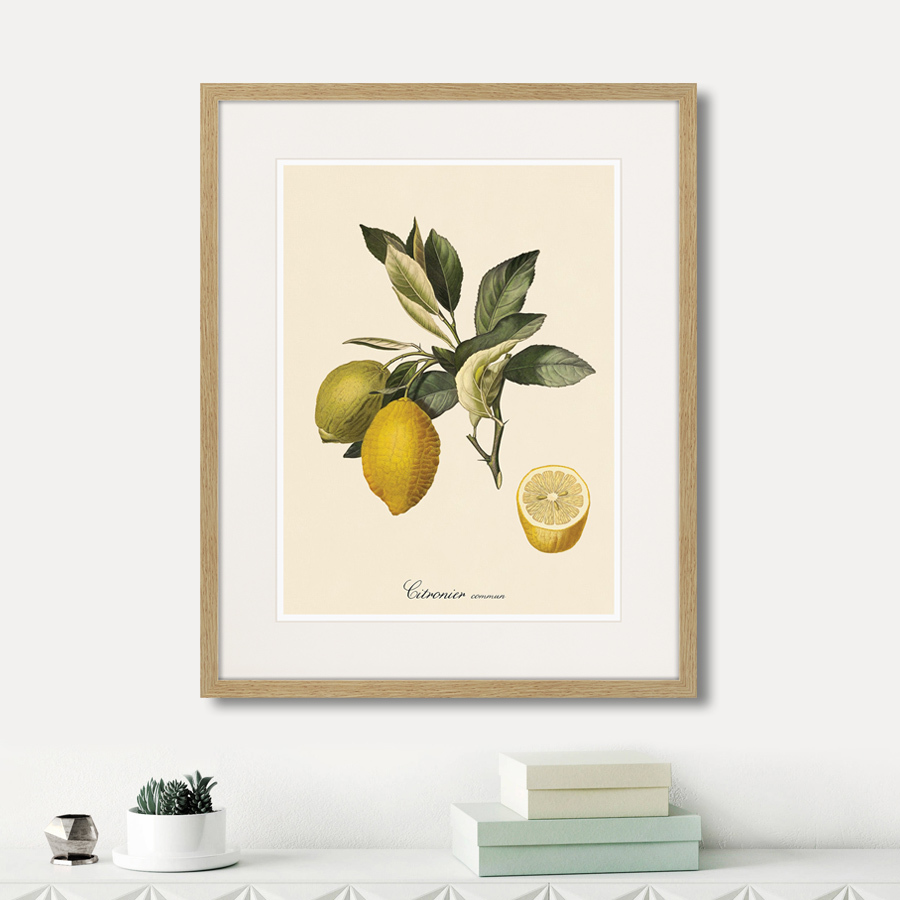 Juicy fruit lithography №3, 1870г.