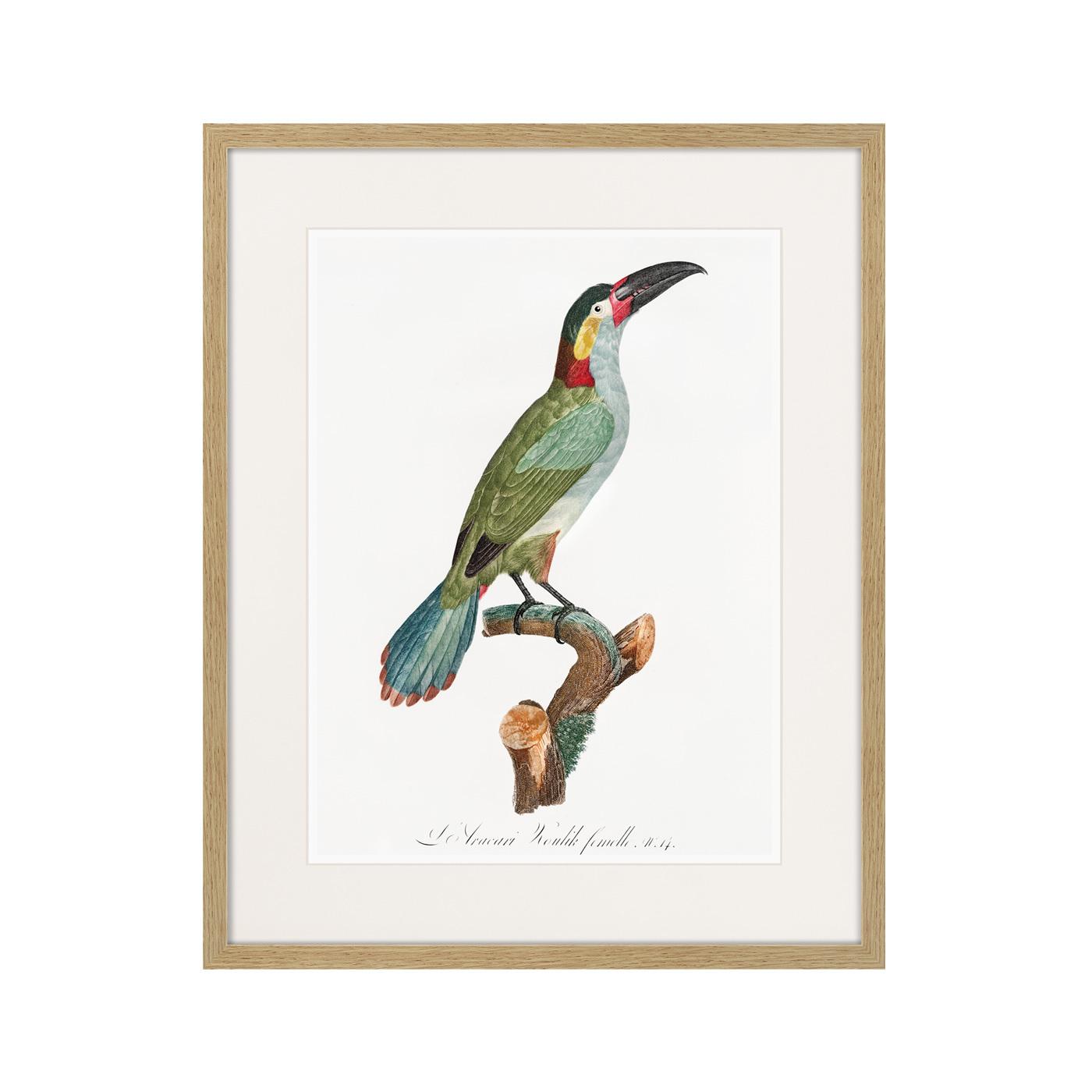 Beautiful toucans №3, 1806г.