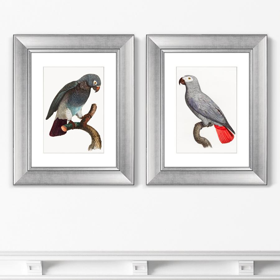 Диптих Beautiful parrots №2, 1872г. (из 2-х картин)