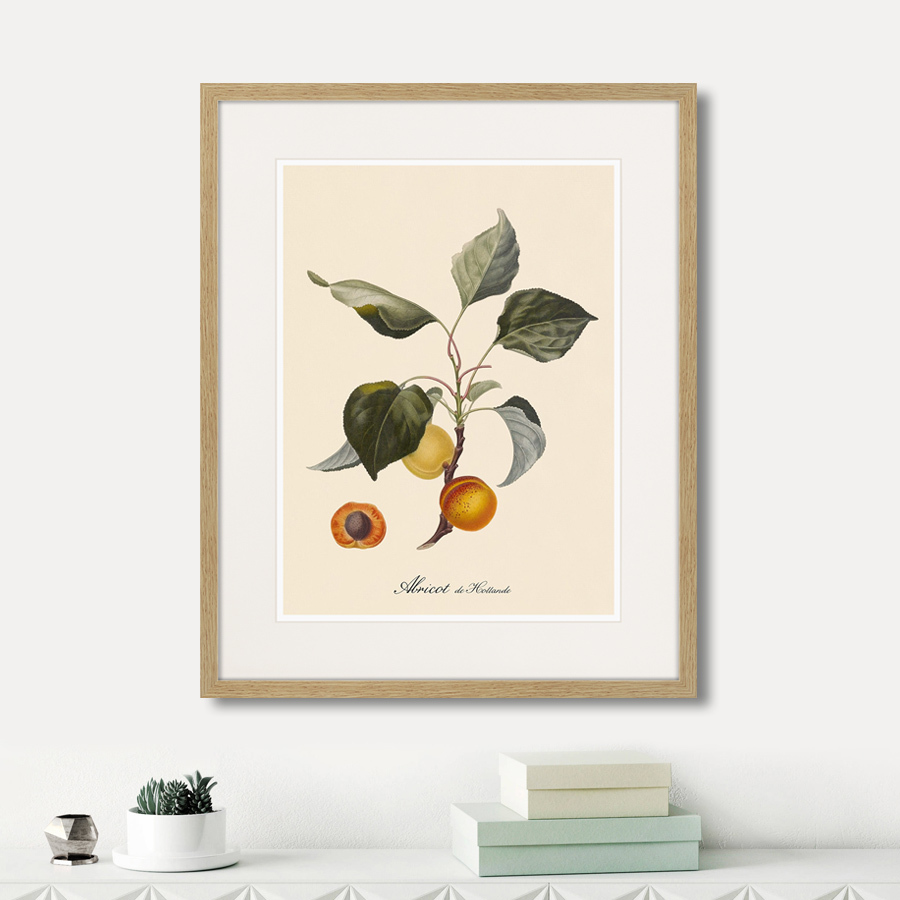 Juicy fruit lithography №2, 1870г.