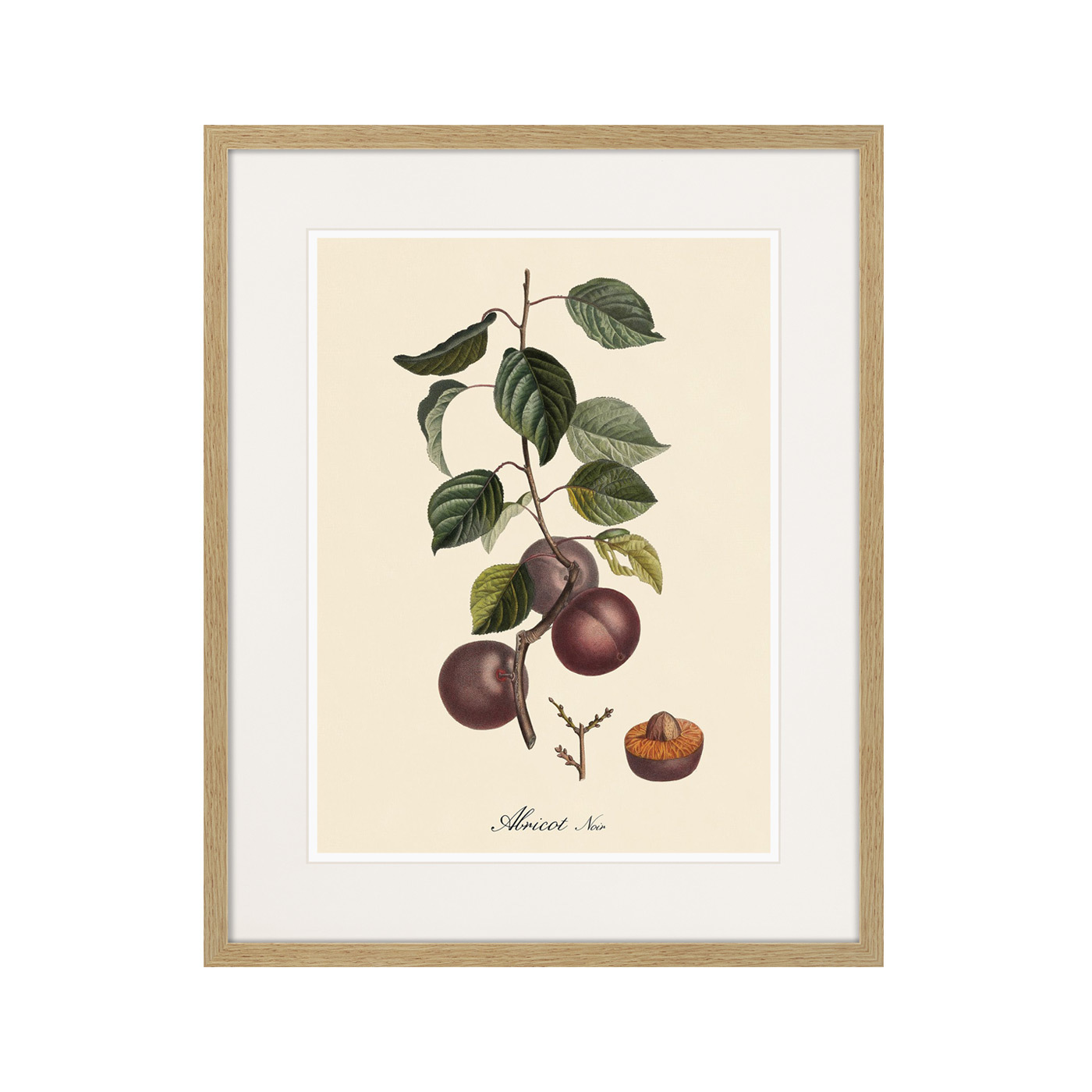 Juicy fruit lithography №6, 1870г.