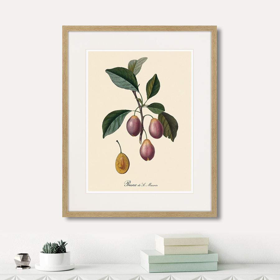 Juicy fruit lithography №9, 1870г.