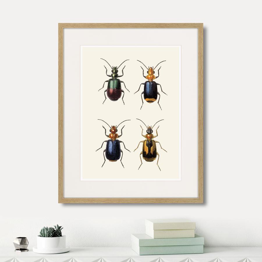 Assorted Beetles №4, 1735г.