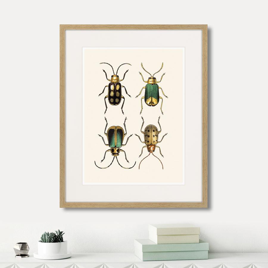 Assorted Beetles №8, 1735г.