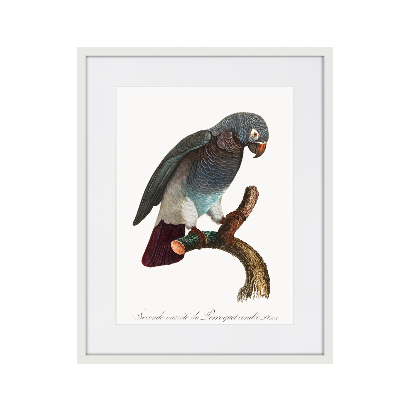 Beautiful parrots №6, 1872г.