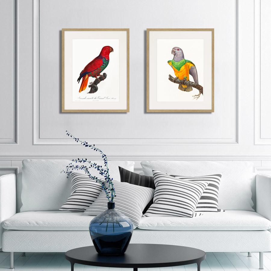 Beautiful parrots №8, 1872г.
