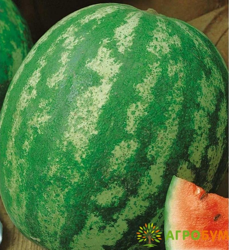 Купить семена Арбуз Ница 1 г по низкой цене, доставка почтой наложенным платежом по России, курьером по Москве - интернет-магазин АгроБум