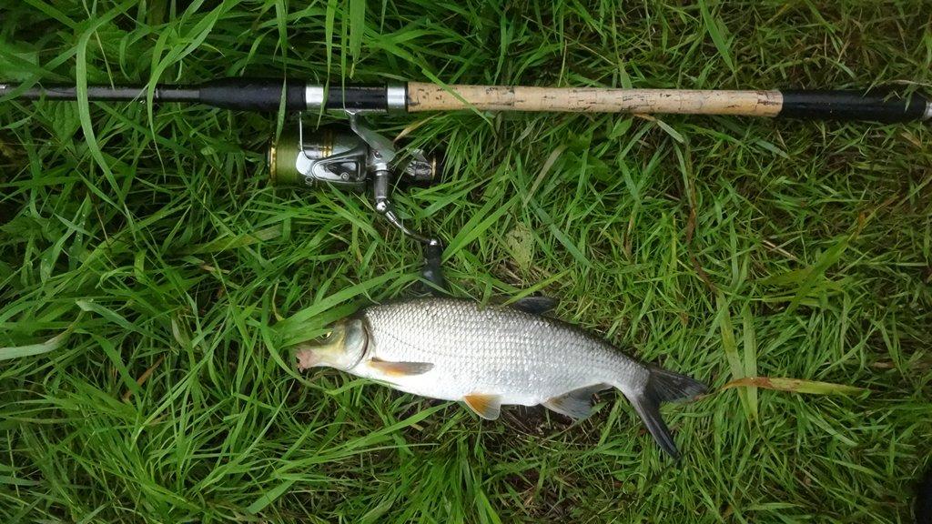 пойман на реке фидером