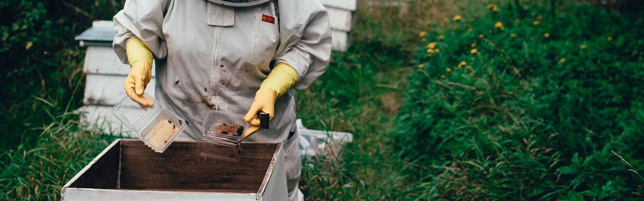 Мёд от настоящих пчеловодов