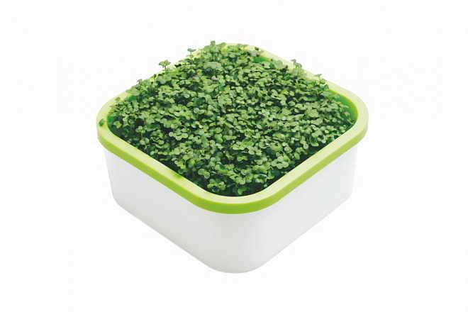 Универсальный проращиватель для микрозелени
