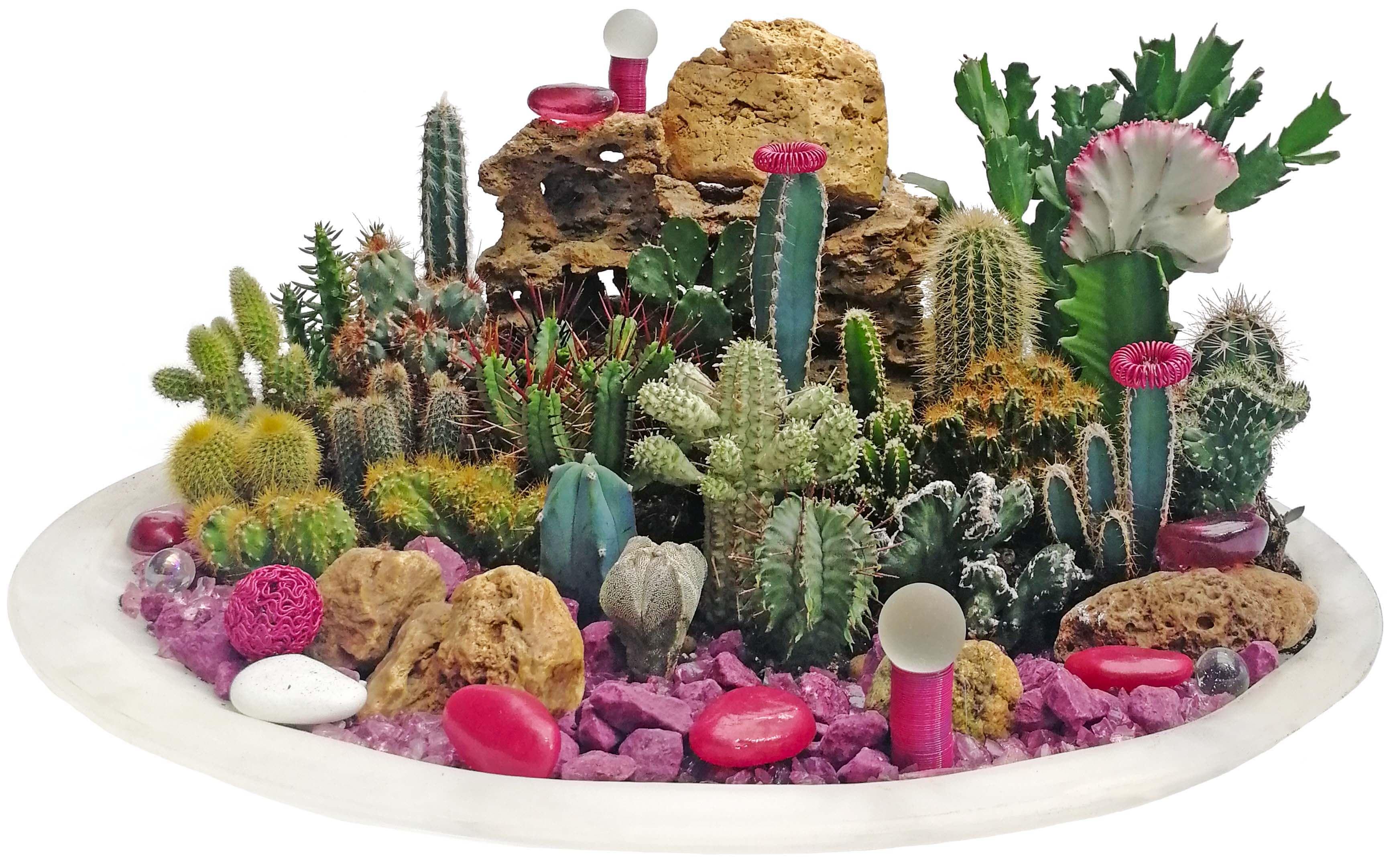 Композиция из кактусов, составленная из растений, представленных на сайте. Создана нашими флористами.