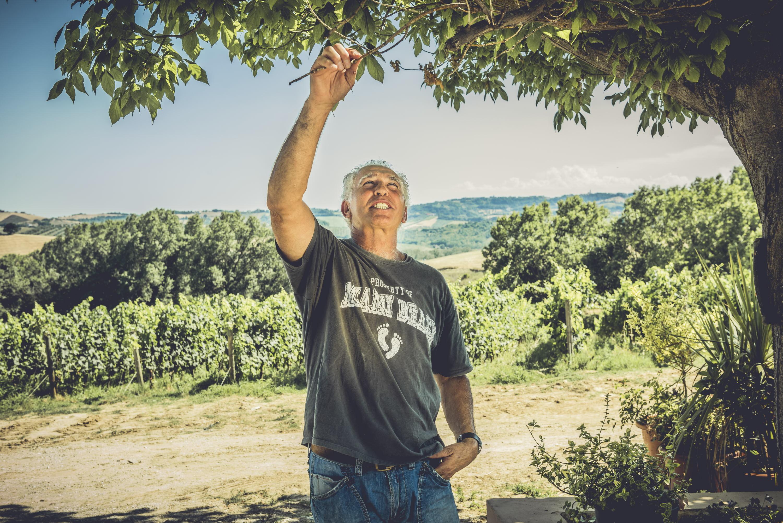 На виноградниках