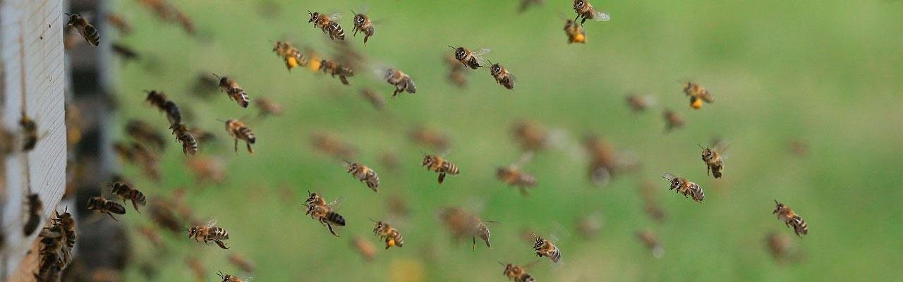 Пчелопродукты для здоровья и жизни