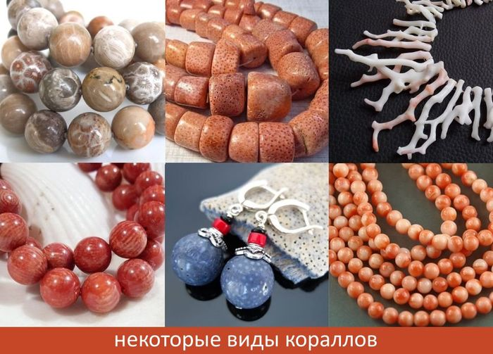 raznoobrazie_korallov_foto