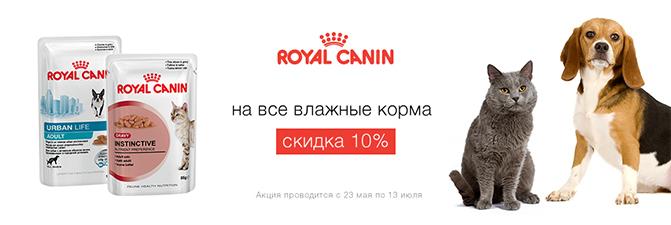 royal-10.jpg