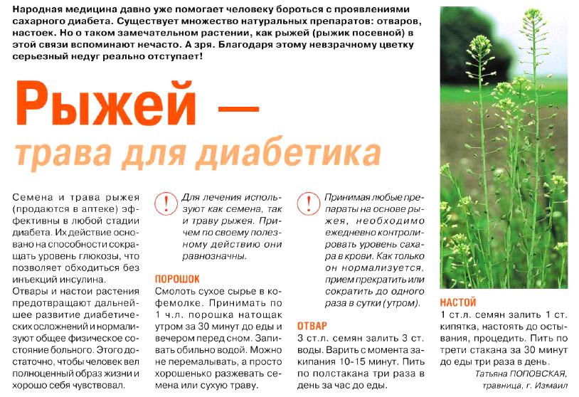 Рыжей - трава для диабетиков