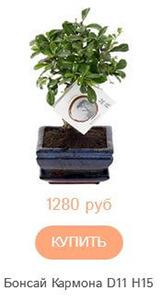 пример названия с параметрами растения