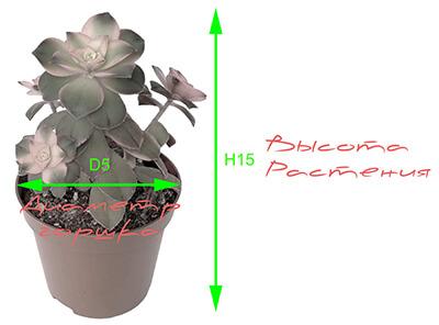 Схема определения высоты горшка и диаметра растения горшечных растений