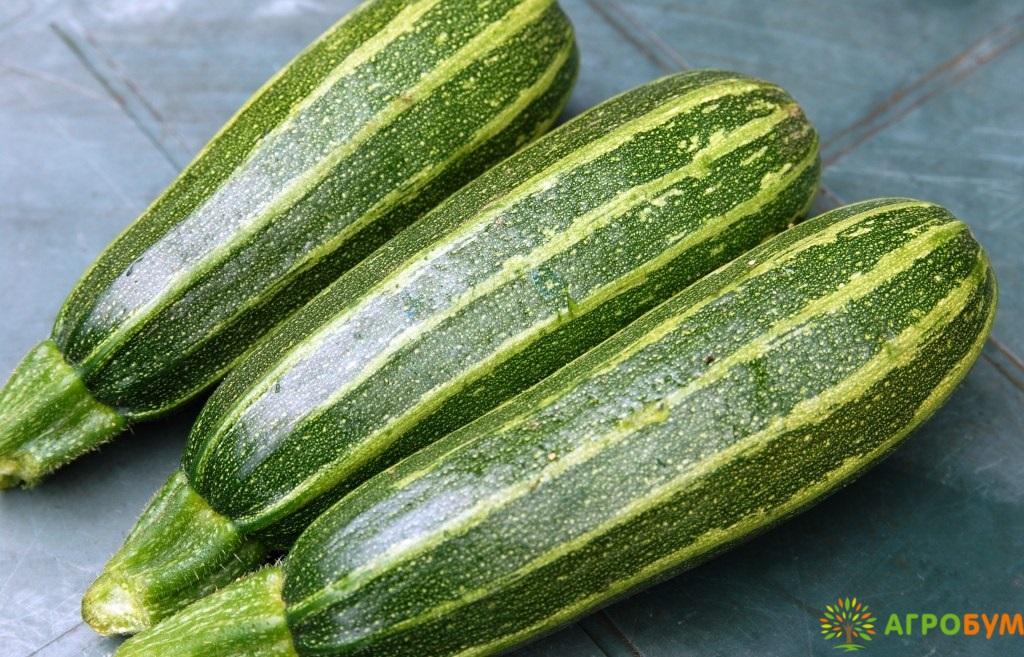 Купить семена Кабачок Зебра 2 г по низкой цене, доставка почтой наложенным платежом по России, курьером по Москве - интернет-магазин АгроБум