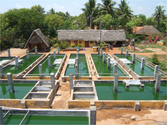 Бассейны по выращиванию спирулины в Ауровиле, Индия