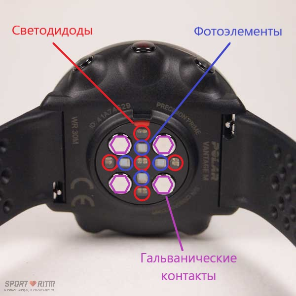 Элементы пульсометра Polar Vantage M