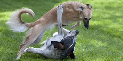 teendogs_400x200.jpg