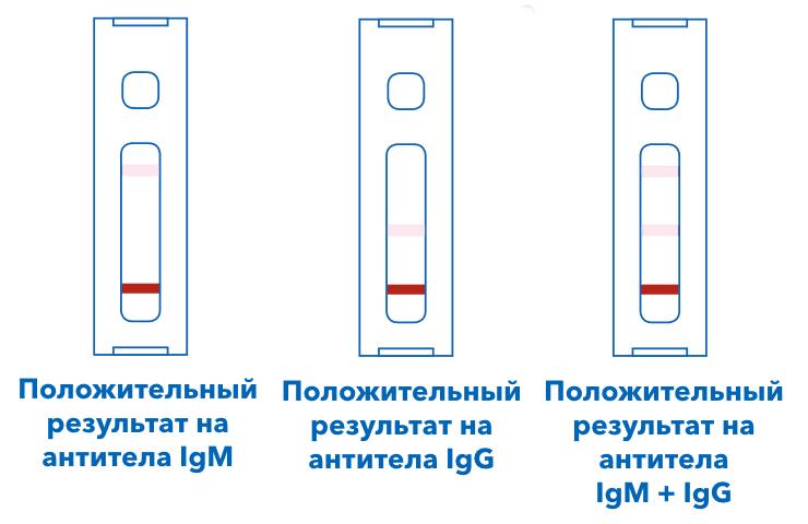 Экспресс тест на антитела к коронавирусу - положительный результат