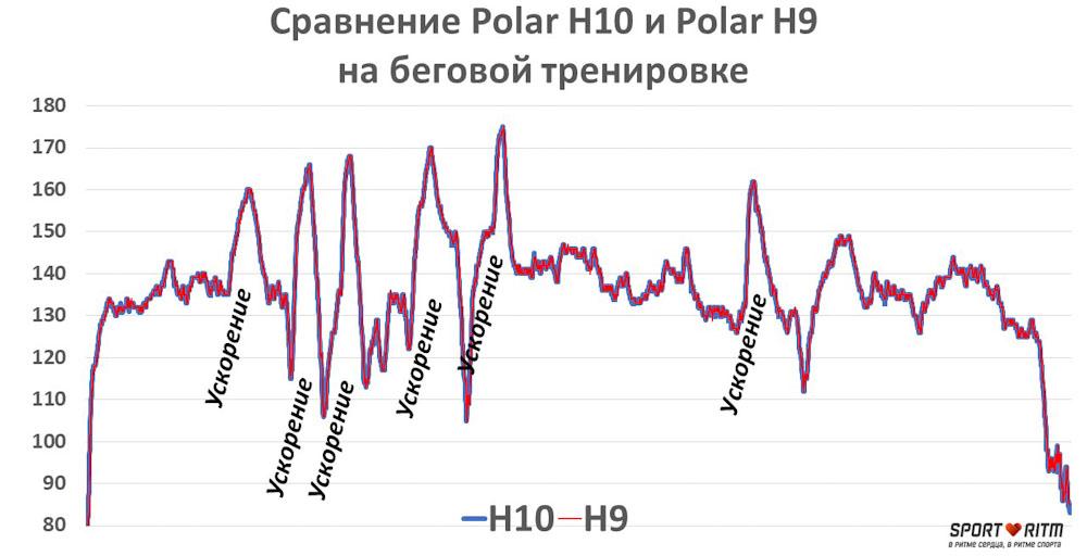 Сравнение Polar H9 и Polar H10