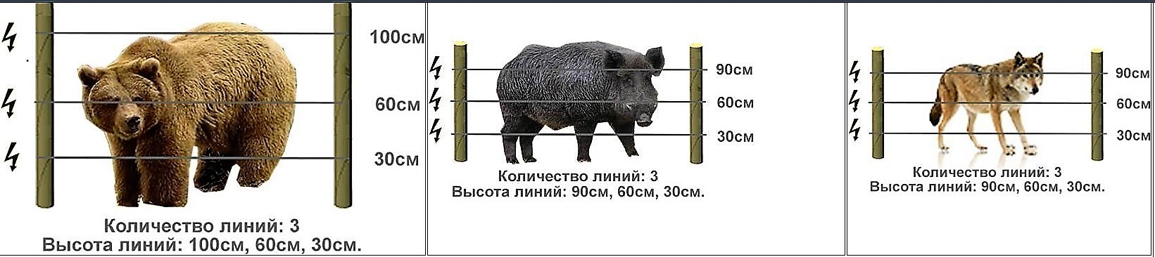 Высота изгороди с электропастухом для диких зверей