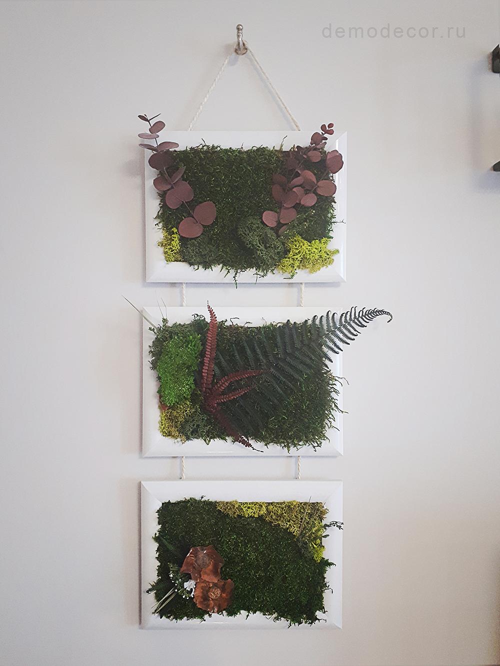 композиция  в рамке из стабилизированных растений