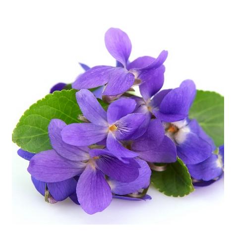 Экстракт фиалки (Viola Tricolor)