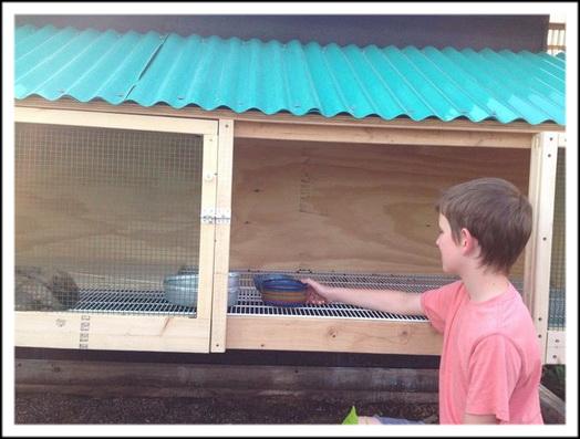 Счастливое заселение кроликов в отель