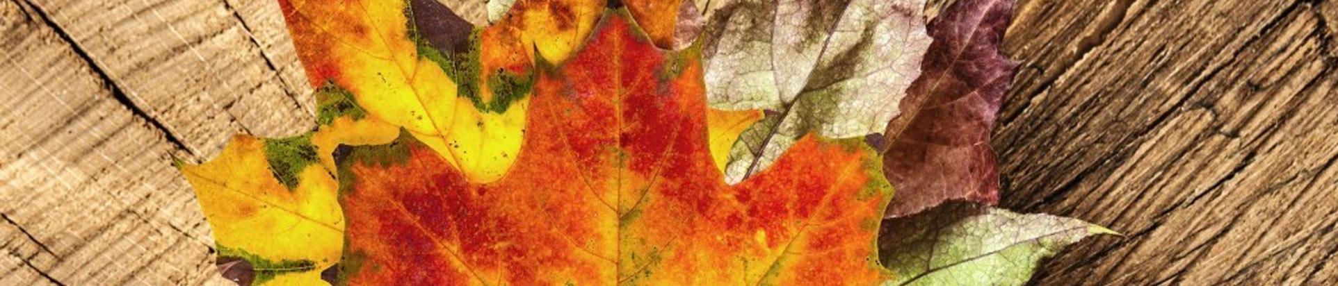 Сбор вязаных вещей для домов-интернатов к 1 октября. Подробнее >>