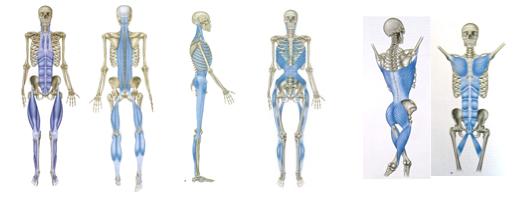 Анатомічні потяги Т. Майерса