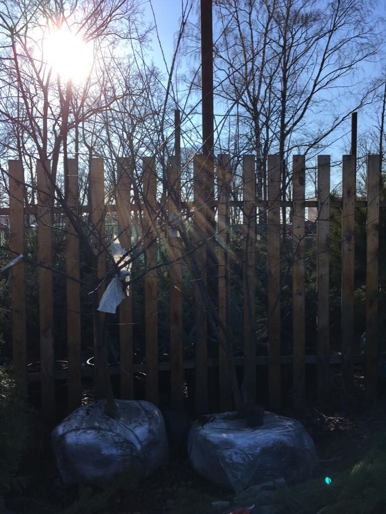 дерево Алыча 7-8 лет купить крупномер