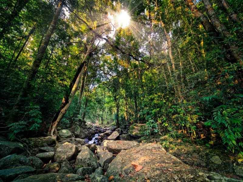jungle-sri-3620.jpg