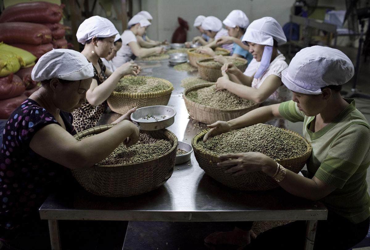 Производство кофе во Вьетнаме