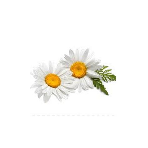 Гидролат ромашки (Anthemis nobilis)