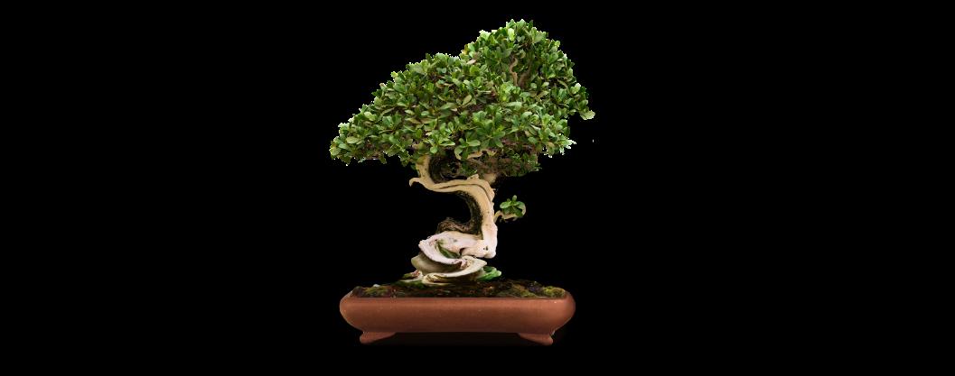 Дерево в горшке