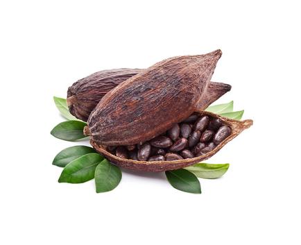 Масло Какао (Theobroma cacao)