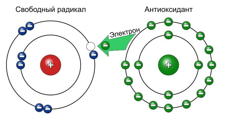 Radikal Antioksidant Elektron 755x400